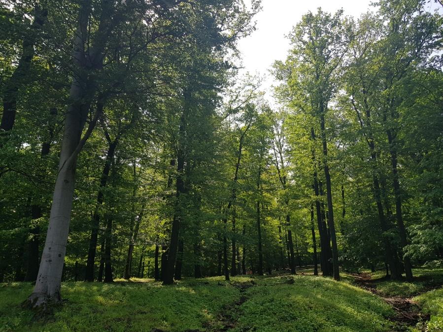 Natur und Meditation lernen