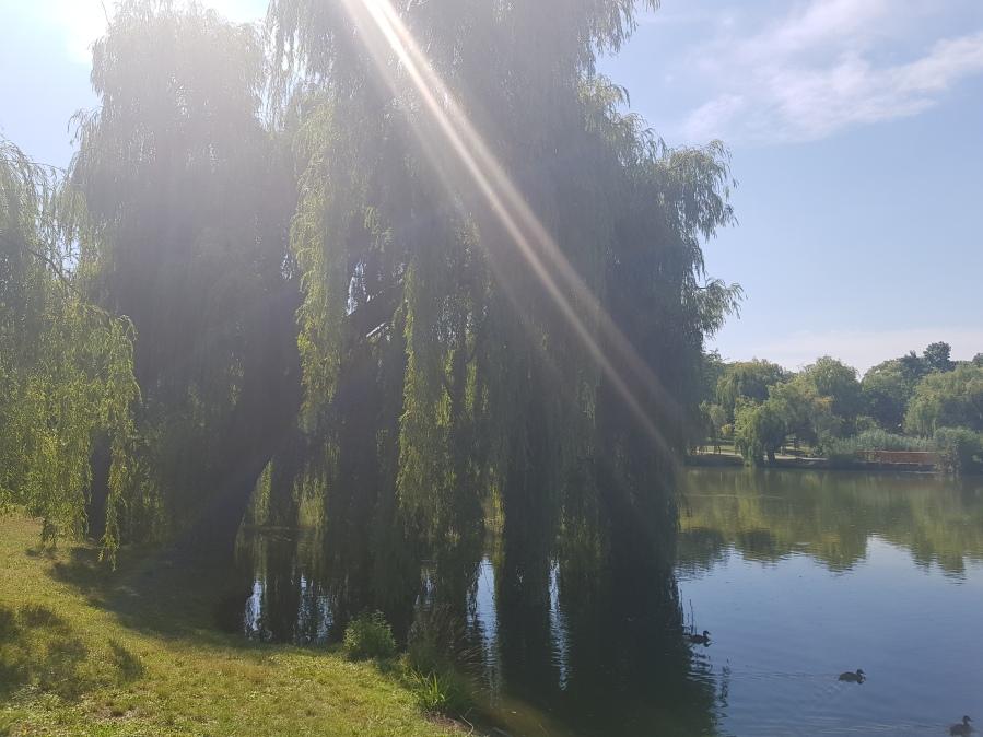 Übungsplatz der Wu Tai Ch Akademie Wien, Volks Park